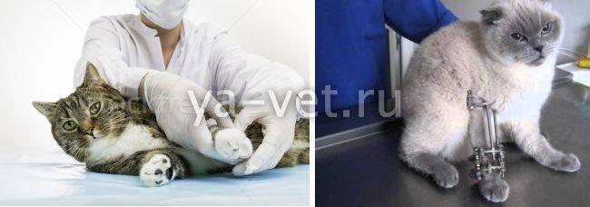 У кошки сломан хвост