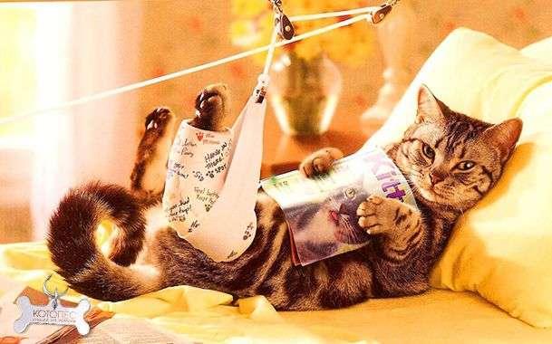 Как быстро устранить запор у кошки в домашних условиях