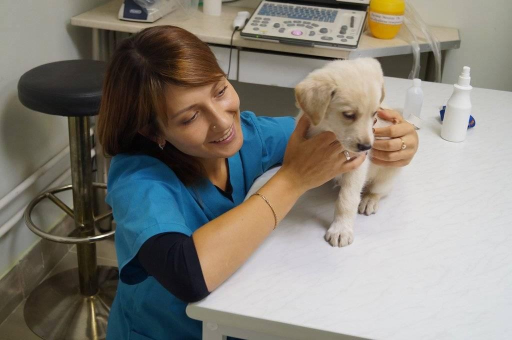 Ветеринарная клиника толстый лори - цены и отзывы , стр 9