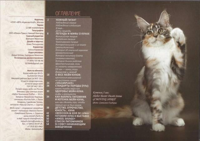 Как правильно выбрать породистого и здорового котенка мейн-куна