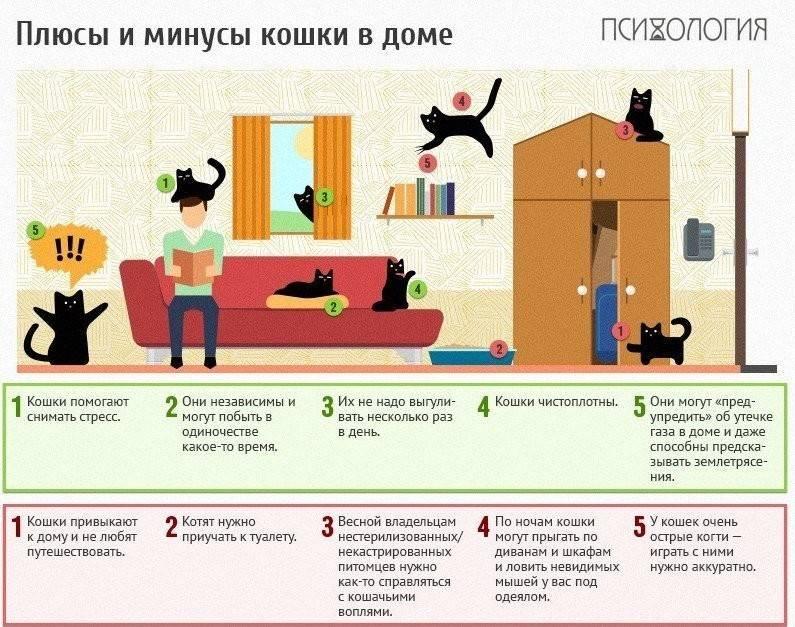 Что покупают котятам в первую очередь