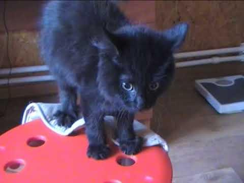 Котенок появился в доме: с чего начать заботу о нем?