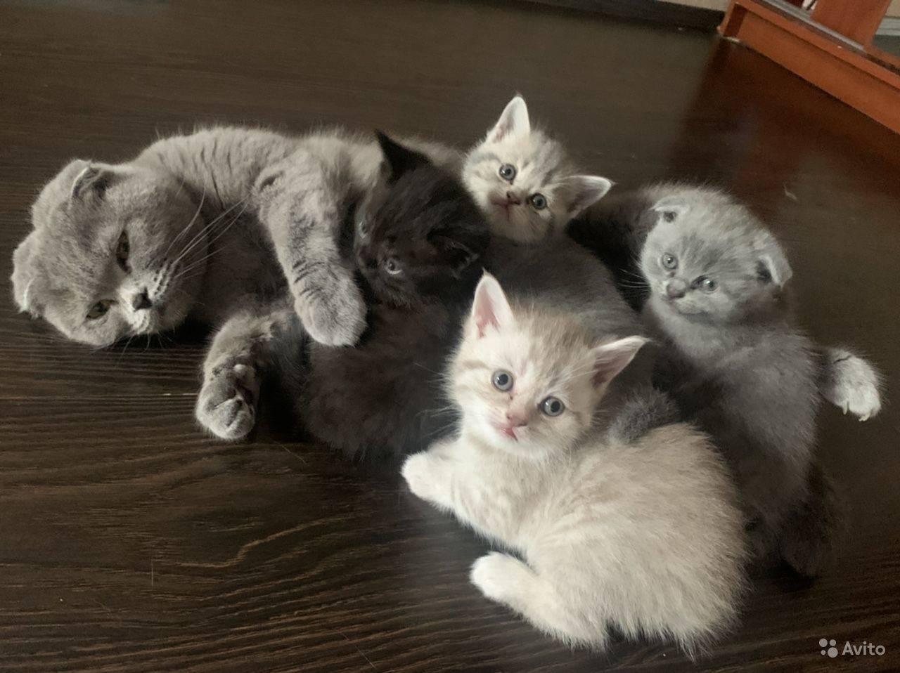 Когда котята начинают есть самостоятельно когда котята начинают есть самостоятельно
