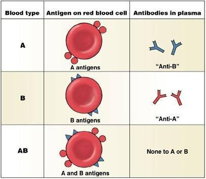 Группа крови у животных: домашних и сельскохозяйственных. особенности переливания