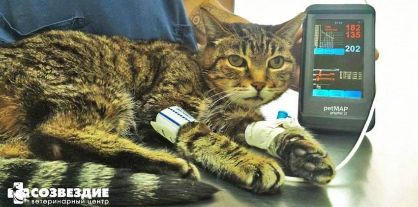 Зачем нужна стерилизация кошки?