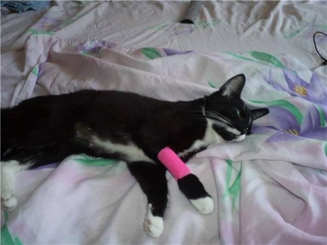 Как долго кот отходит после кастрации и после наркоза: как себя вести