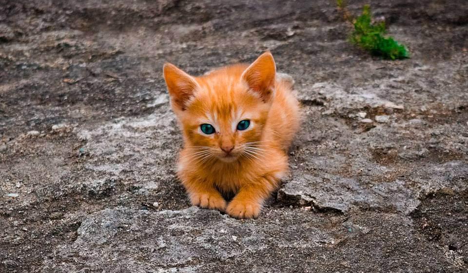 Осложнения после вакцинации кошек