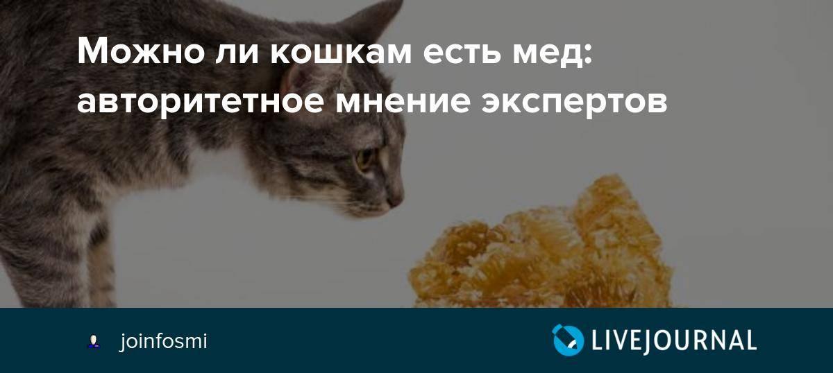 Собираем аптечку для кошки: можно ли использовать лекарства для людей при лечении котов и как понять, что кошке нужно оказать первую помощь