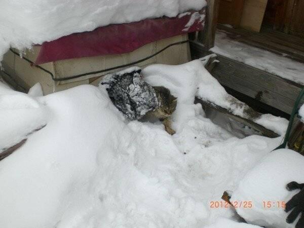 Почему собаки и их лапы не мерзнут зимой на морозе, при какой температуре мерзнут собаки, что делать, как утеплить будку для собак?