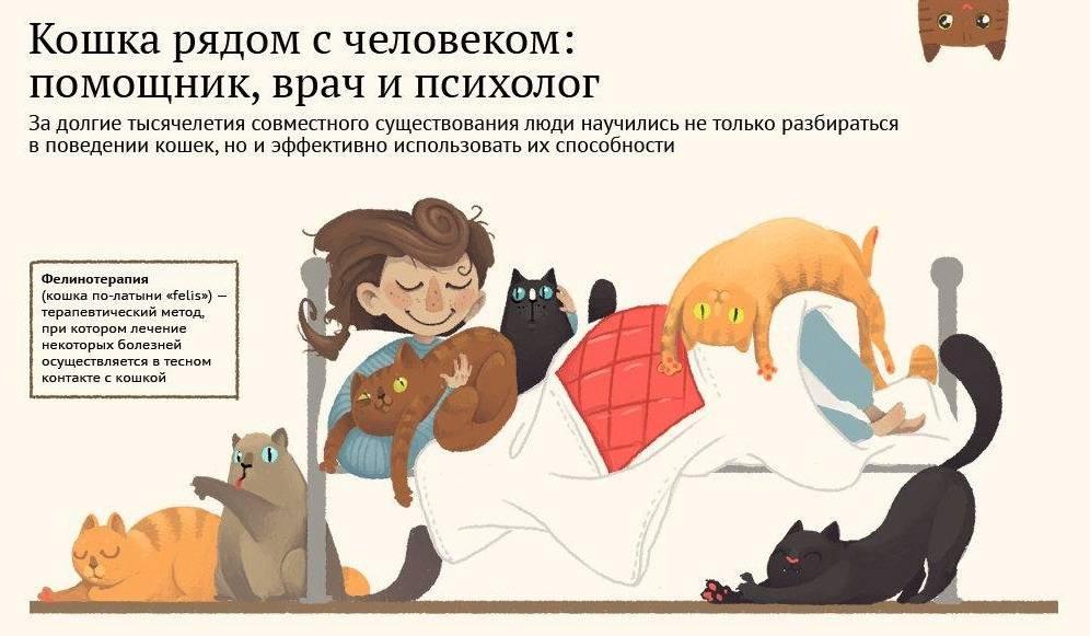 Польза и вред от кошек дома. польза и вред от кошки в доме польза кошек для здоровья детей