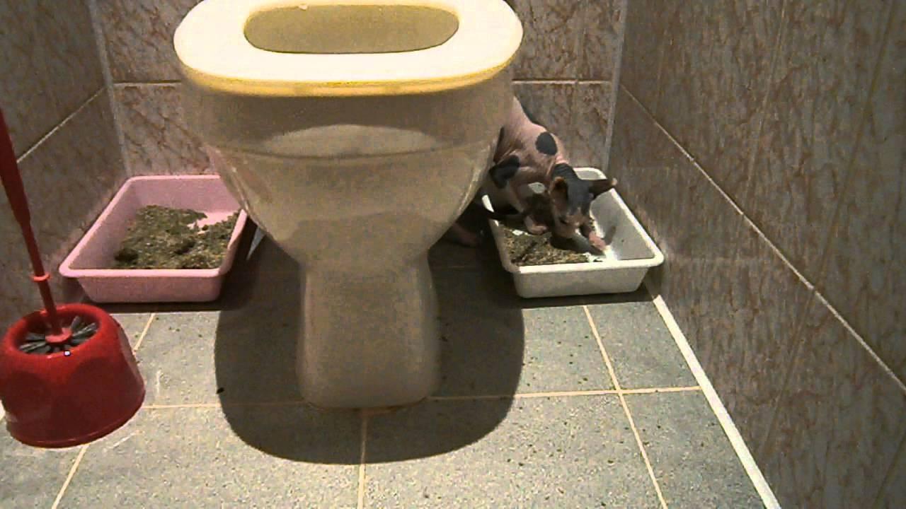 Сколько раз стерилизованная кошка должна ходить в туалет | my darling cats
