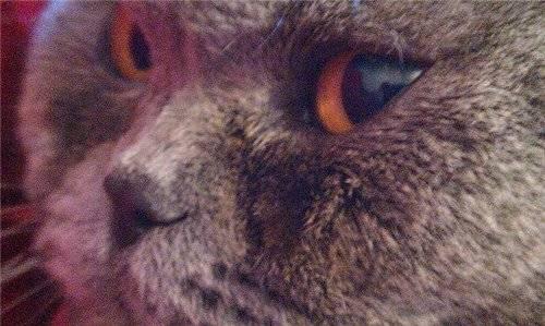 Выделения у кошек из глаз и носа