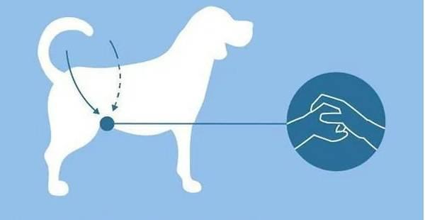 Что делать, если собака подавилась: оказание первой помощи, обращение к ветеринару, как избежать несчастного случая
