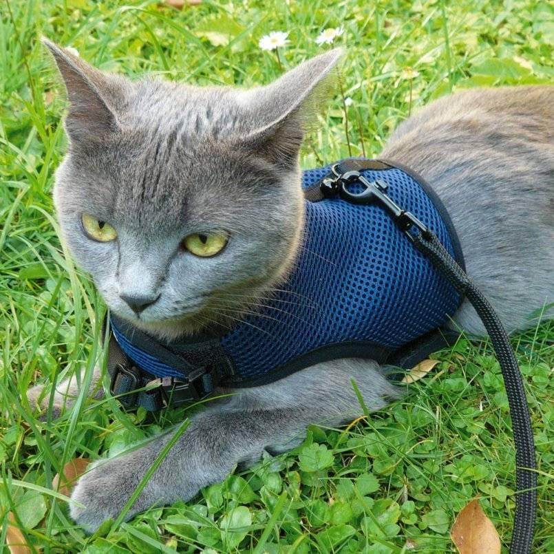 Шлейки и поводки для кошек, их достоинства и недостатки