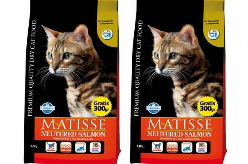 Сравнение кормов для котят farmina, landor, gina, hill's и natyka