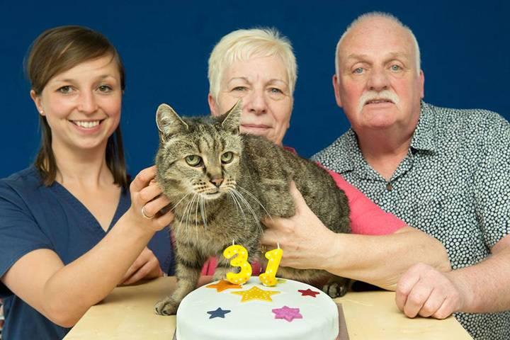 Какие породы кошек являются долгожителями