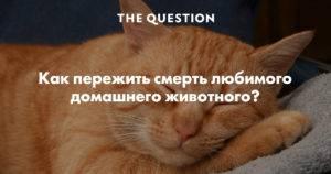 Как пережить смерть кота или кошки и справиться с чувством вины: советы психолога и священника