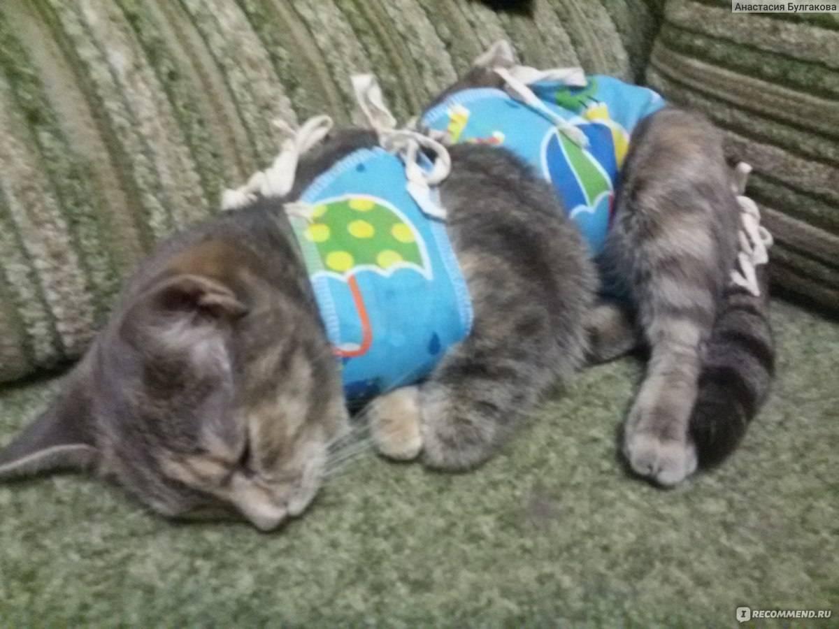 Стерилизация кошек: плюсы и минусы