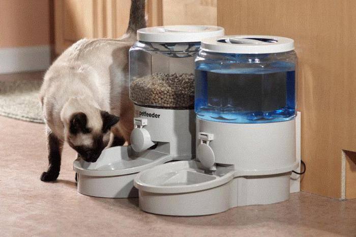 Автоматические кормушки для кошек и собак: особенности разных моделей