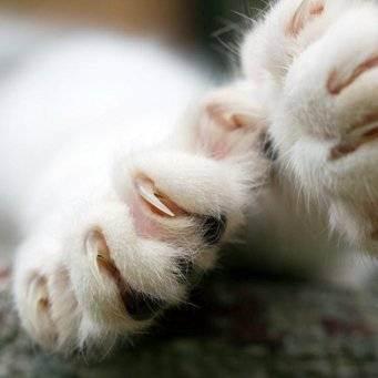 Помыть кошку или кота в салоне