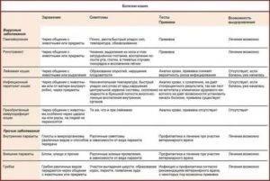 Коронавирус у кошек: симптомы и лечение, вакцина от инфекции для котят и взрослых котов, анализ