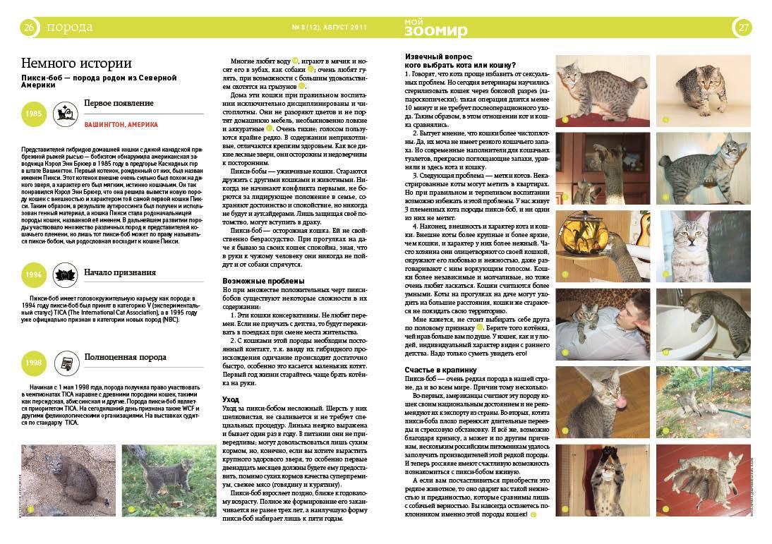 Порода диких степных кошек каракал: описание и содержание в домашних условиях