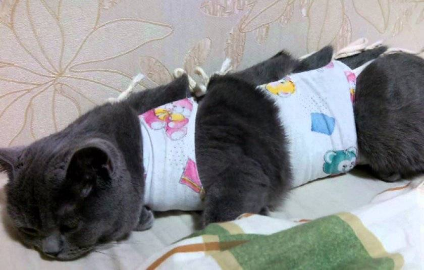 Бандаж для кошки: выкройки и инструкция по изготовлению