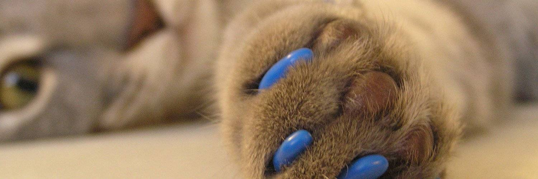Операция для кошек «мягкие лапки» — особенности процедуры и послеоперационный уход за питомцем