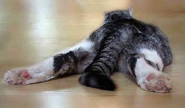 Почему у кошки нет аппетита: что делать для повышения аппетита