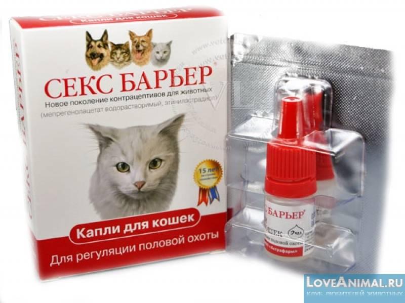 Противозачаточные для кошек: уколы, таблетки, капли