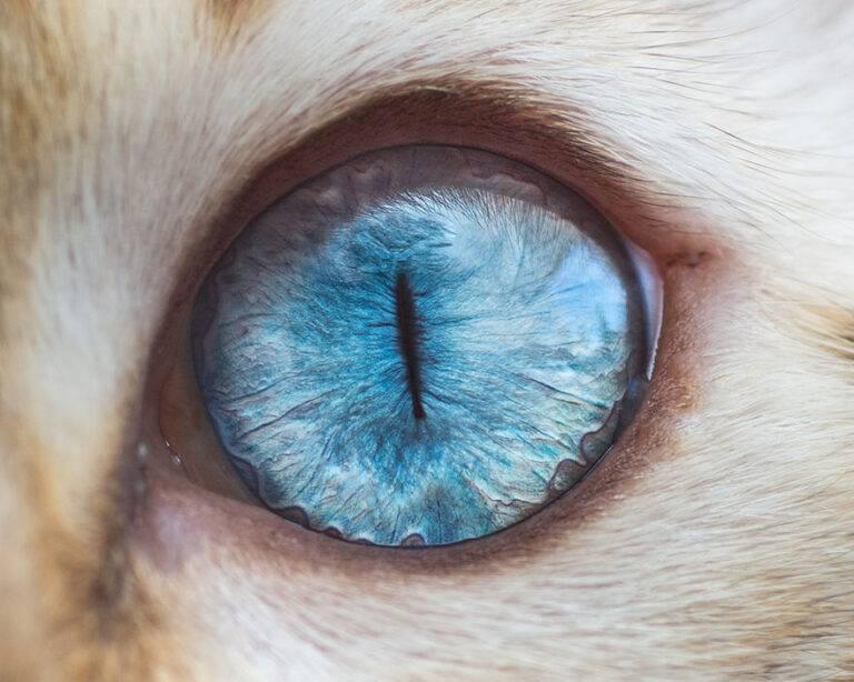 Болезни глаз у кошек - список, причины, симптомы и лечение