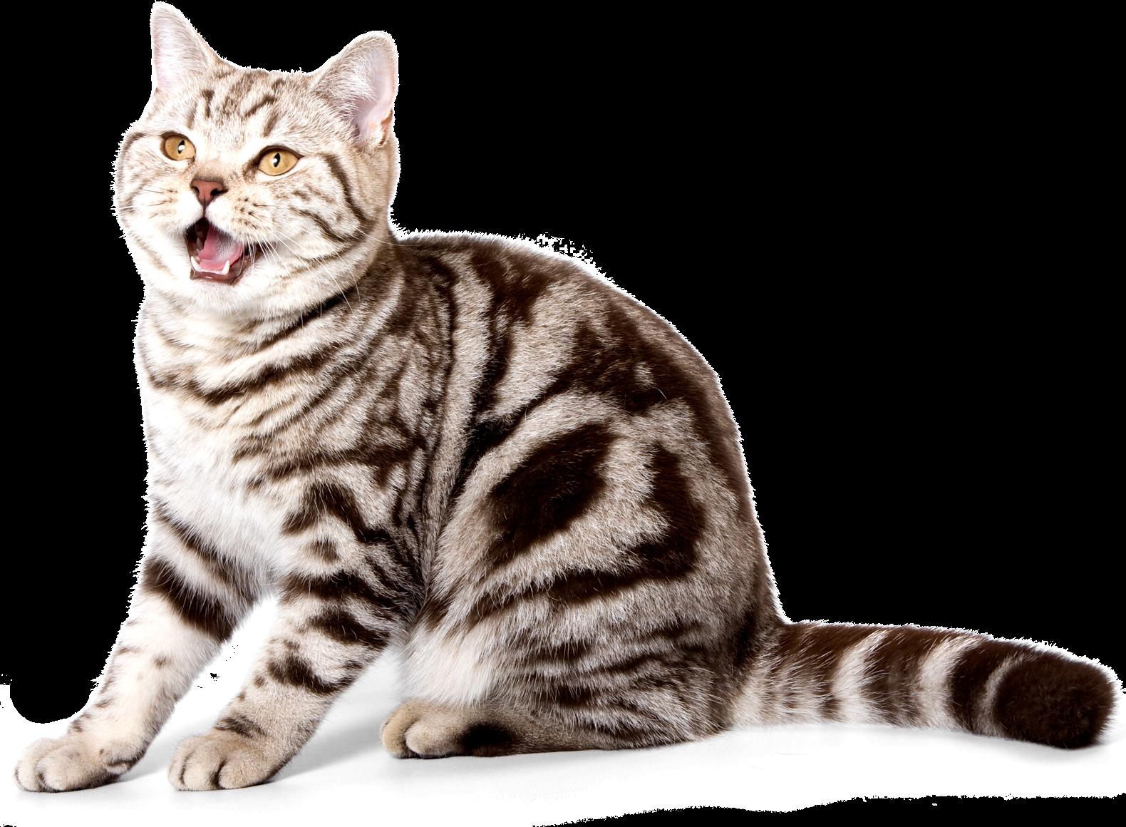 10 советов как сохранить здоровье кошки