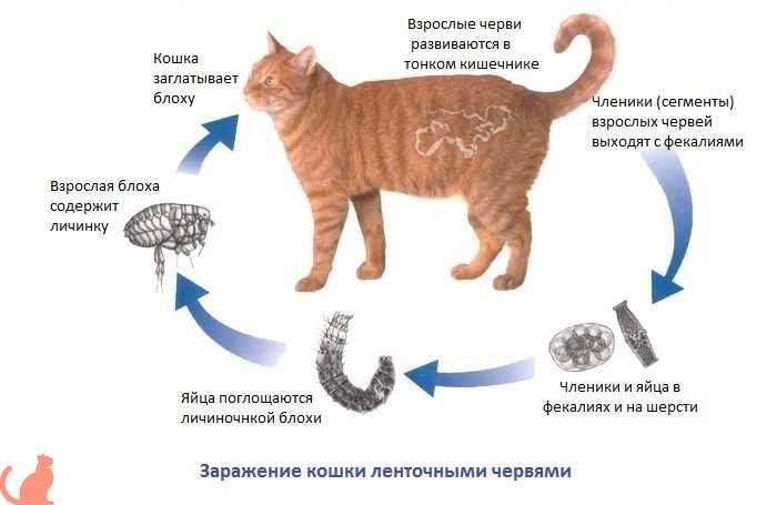 Кровь в кале у кошки - причины и лечение | берлога