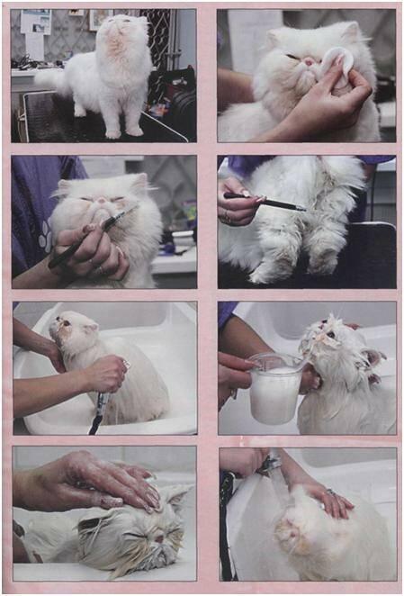 Правила и рекомендации по правильному уходу за домашними кошками и котами