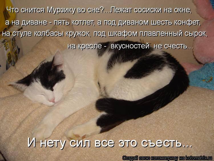 Сонник кошка приснилась мужчине. к чему снится кошка приснилась мужчине видеть во сне - сонник дома солнца