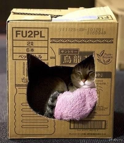 Почему кошки любят коробки и пакеты? ответы эксперта
