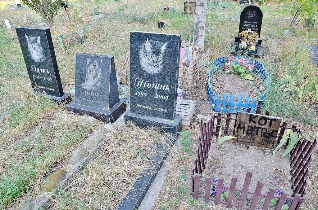 Как и где правильно похоронить кота зимой и в другие времена года