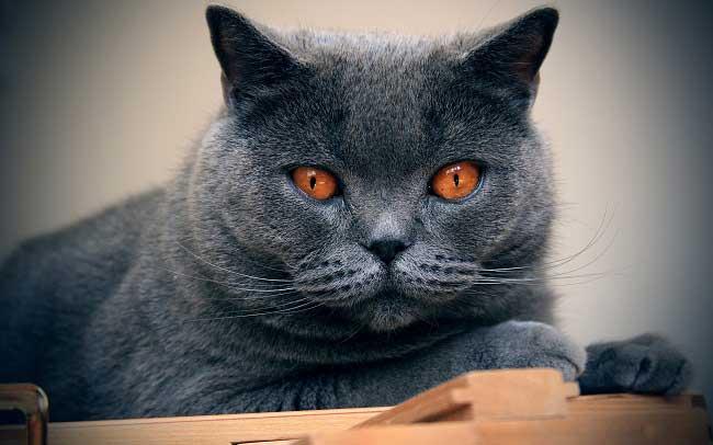 Как узнать кот или кошка у котят, котик или кошечка как определить