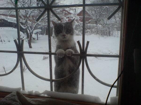 Выживут ли котята зимой на даче