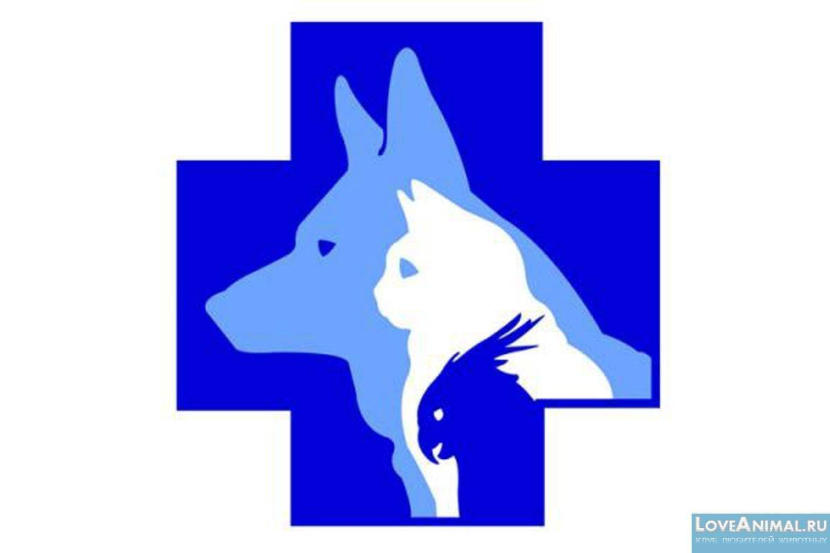 Бабезиоз (пироплазмоз) собак
