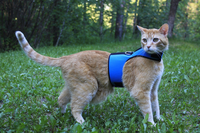 Дела амурные — кошка просит кота. что делать владельцам?