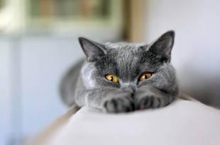Взаимоотношения кошек друг с другом | мурчики