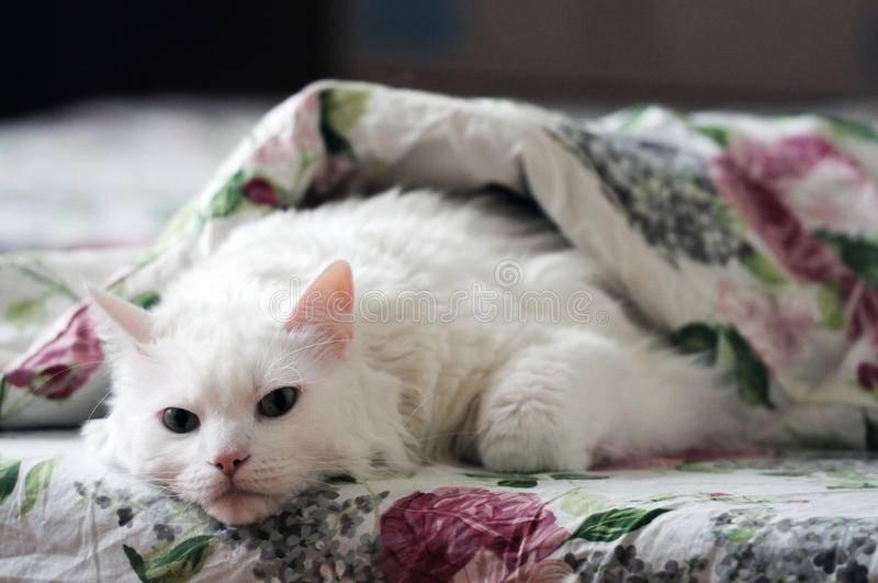 Почему кот сосет одеяло – как избавить питомца от вредной привычки?