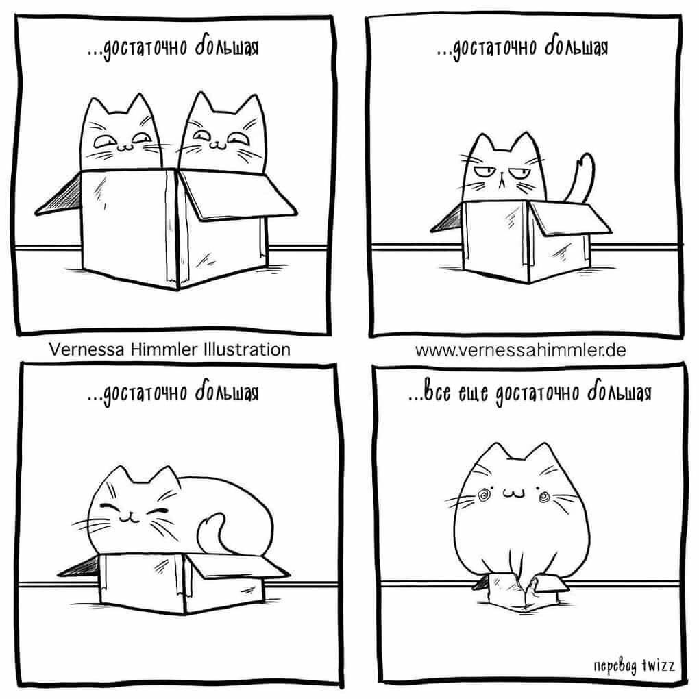 Рекомендации любителям животных: стоит ли заводить котёнка или кошку