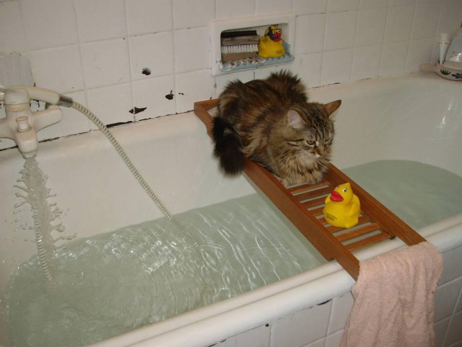 Как помыть кота, если он боится воды и царапается?