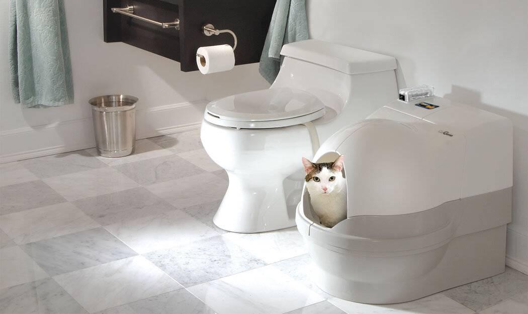 Автоматические туалеты для кошек: марки и характеристики самоубирающихся лотков-унитазов