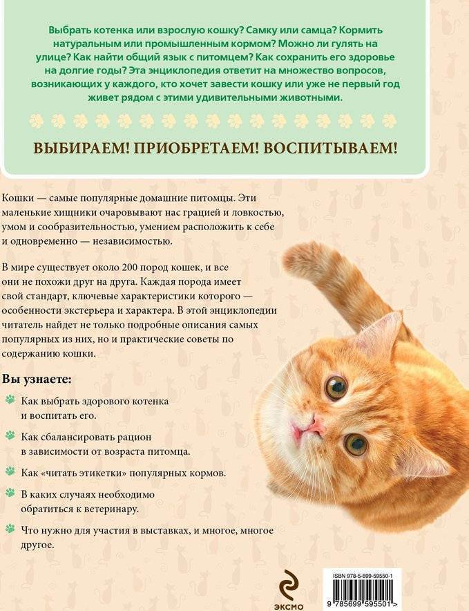 Кошка гуляет как успокоить, что делать, народные средства кошка гуляет как успокоить, что делать, народные средства