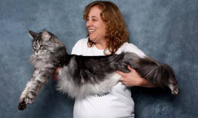Рекорды гиннеса у кошек