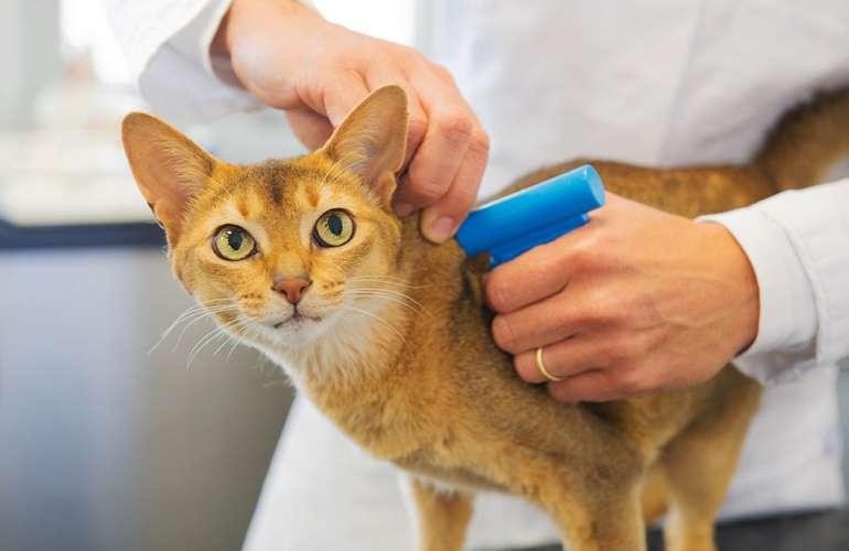 Владельцев домашних животных обяжут чипировать своих любимцев // нтв.ru