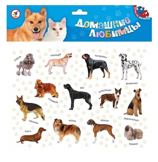 Породы средних собак с названиями, фотографиями и описанием особенностей характера